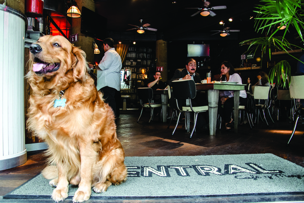 restaurantes para perros en Madrid