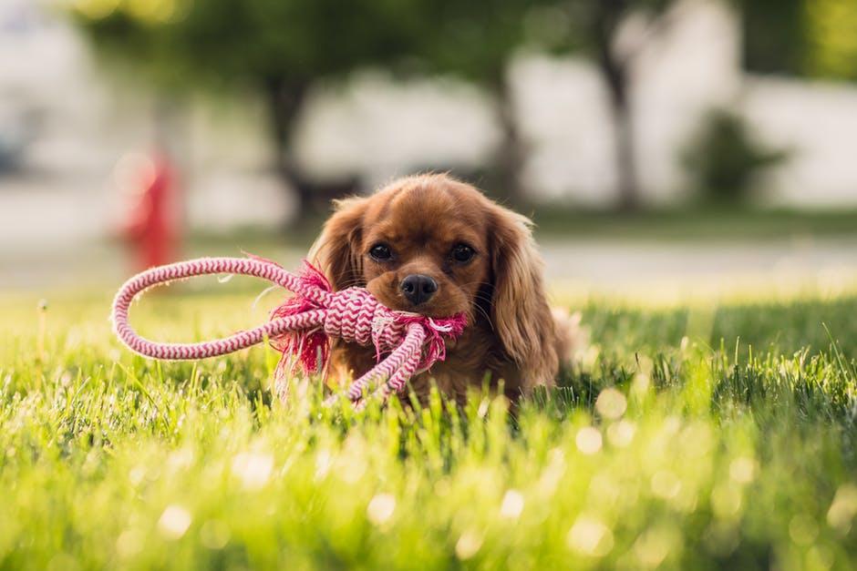 pasear a tu perro en Madrid