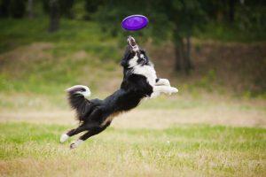 deportes que hacer con tu perro