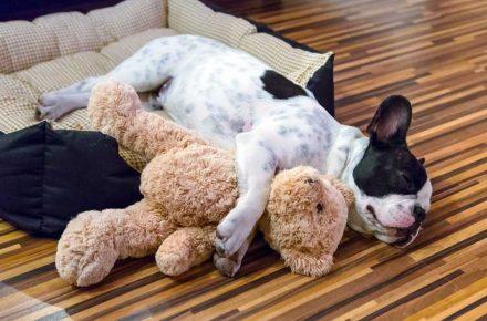alojamiento para perros