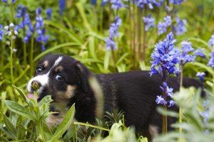 precauciones con tu perro en primavera