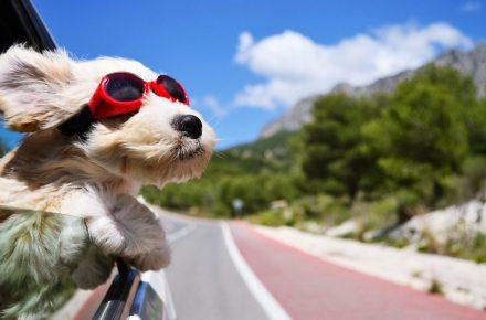 cosas imprescindibles para viajar con perro