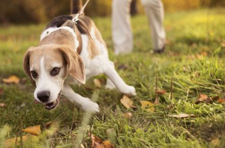 los problemas más comunes de los perros