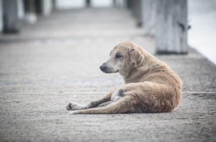 abandono de animales en Semana Santa