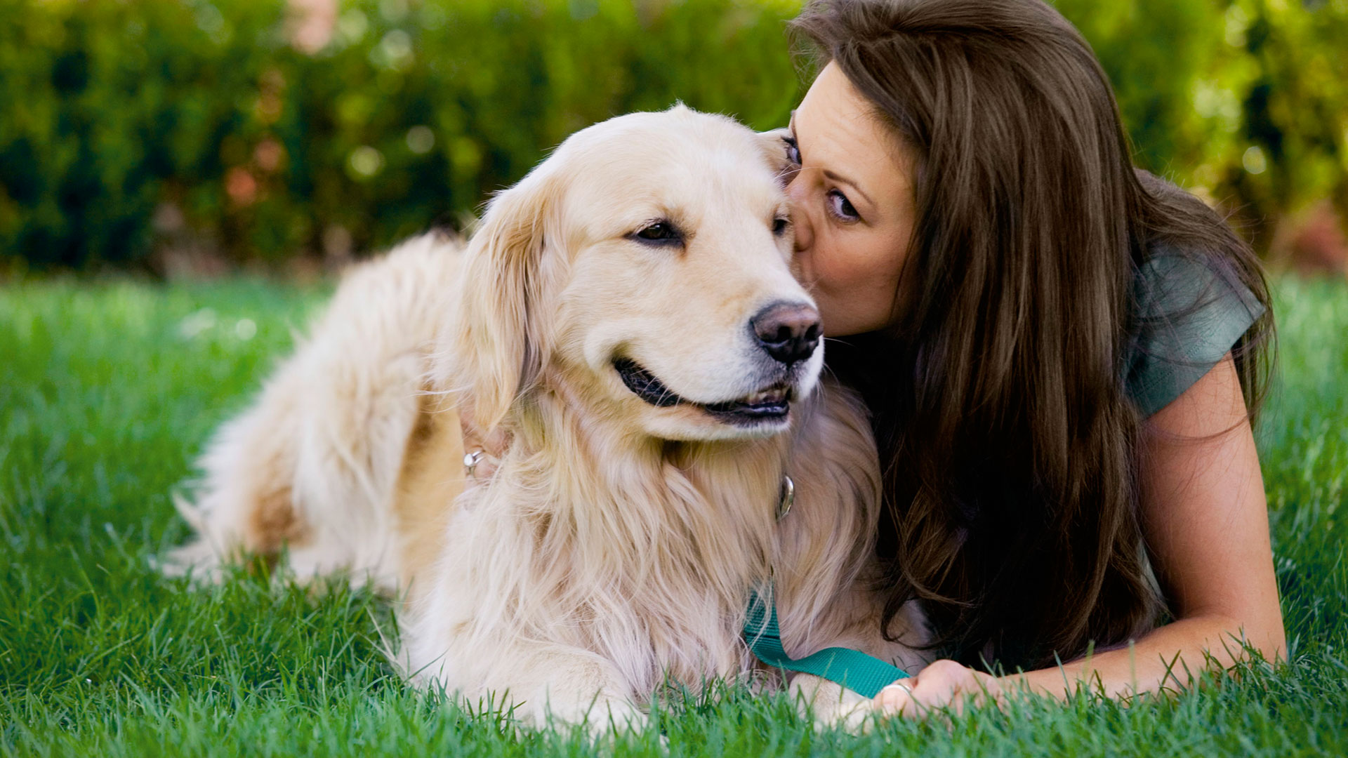 guardería de día para perros