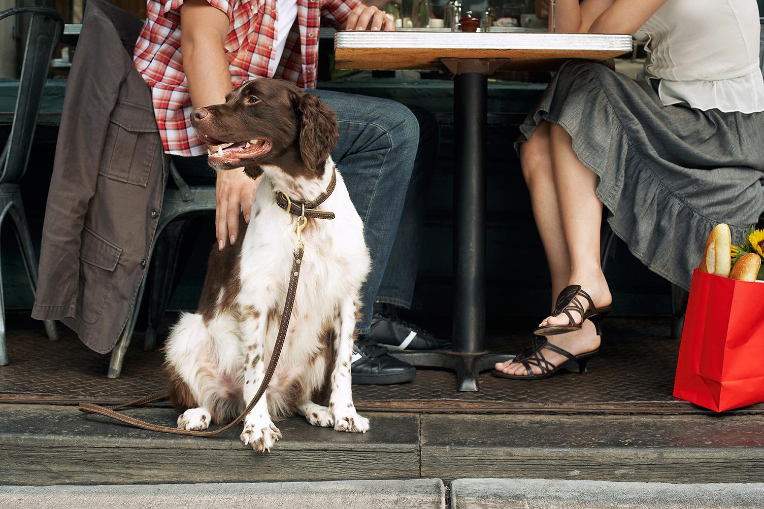 Restaurantes para perros en Barcelona