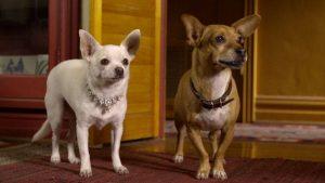 perros del cine y la tv