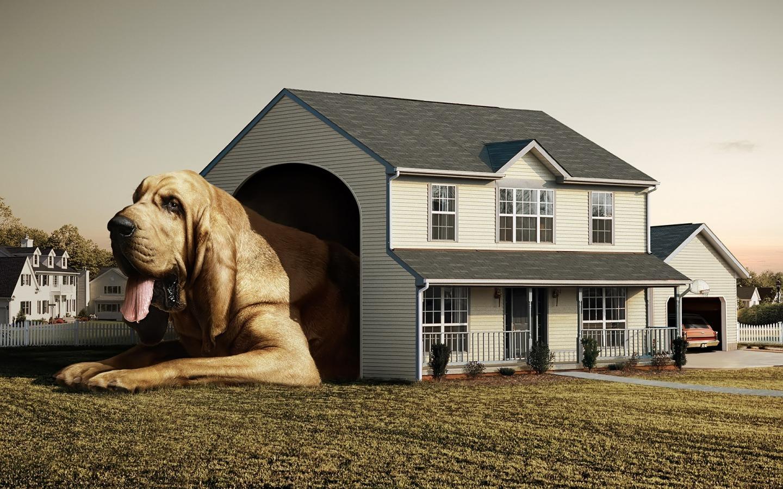 alojar a tu perro en un hogar