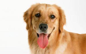 curiosidades sobre perros