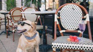 fin de semana con tu perro en barcelona