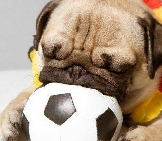 perros de futbolistas
