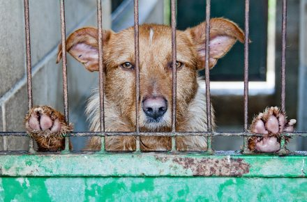 abandono de animales