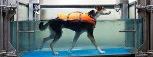 planes refrescantes con perro