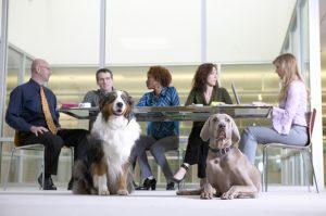 oficinas dogfriendly
