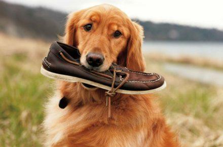 perro aspirador