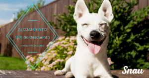 crucero dogfriendly