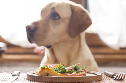 restaurantes dogfriendly