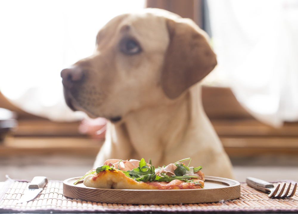 restaurantes dogfriendly