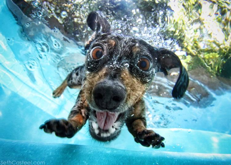 jornada de puertas abiertas para perros