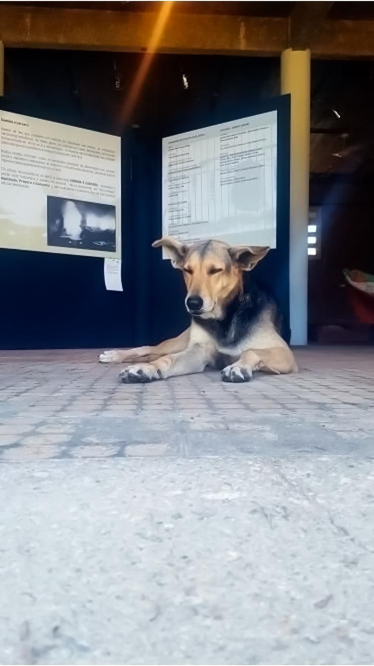 perros de brasil