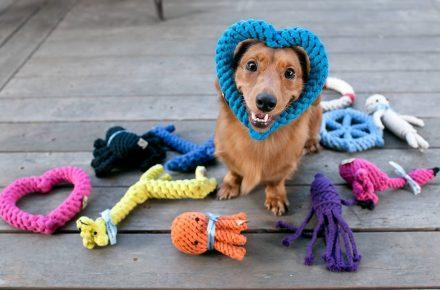 juguetes diy para perros