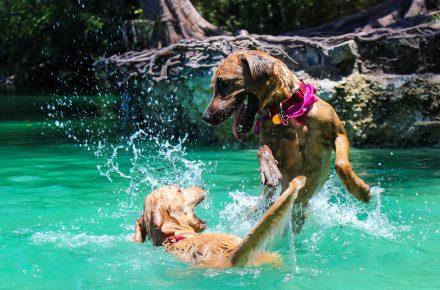 bañarse con perro