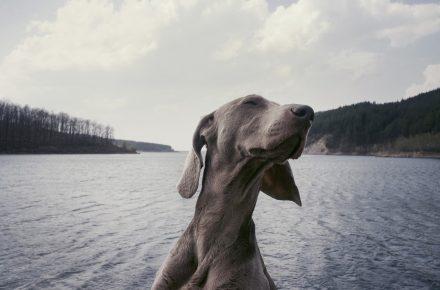 bañarse con perro en zonas naturales