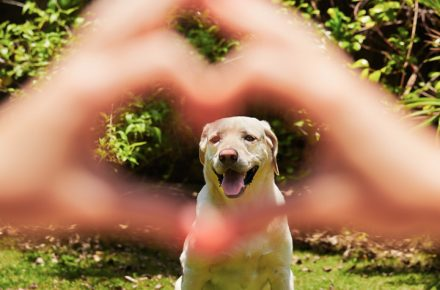 tus latidos y los de tu perro