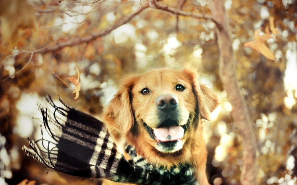 perros en otoño