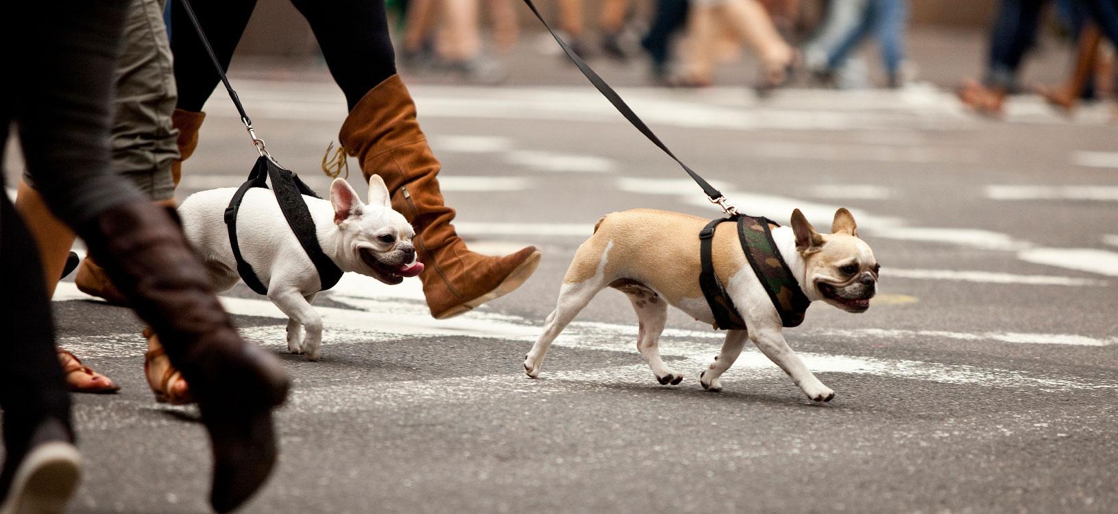 servicios para perros