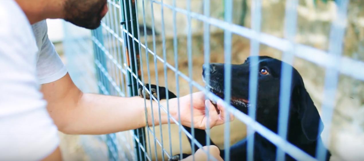 contra el abandono animal