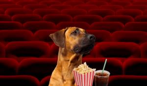 perros gratis cine