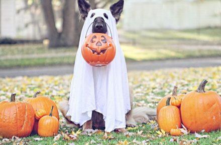 halloween con perros