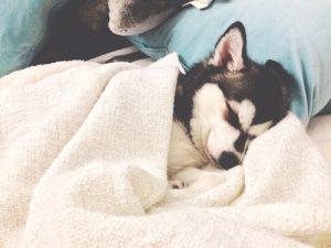 Perro durmiendo en la cama