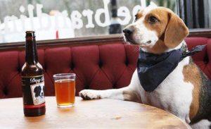 Perro sentado en la mesa