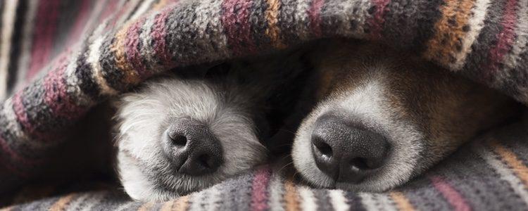perros pasan frio abrigo caliente