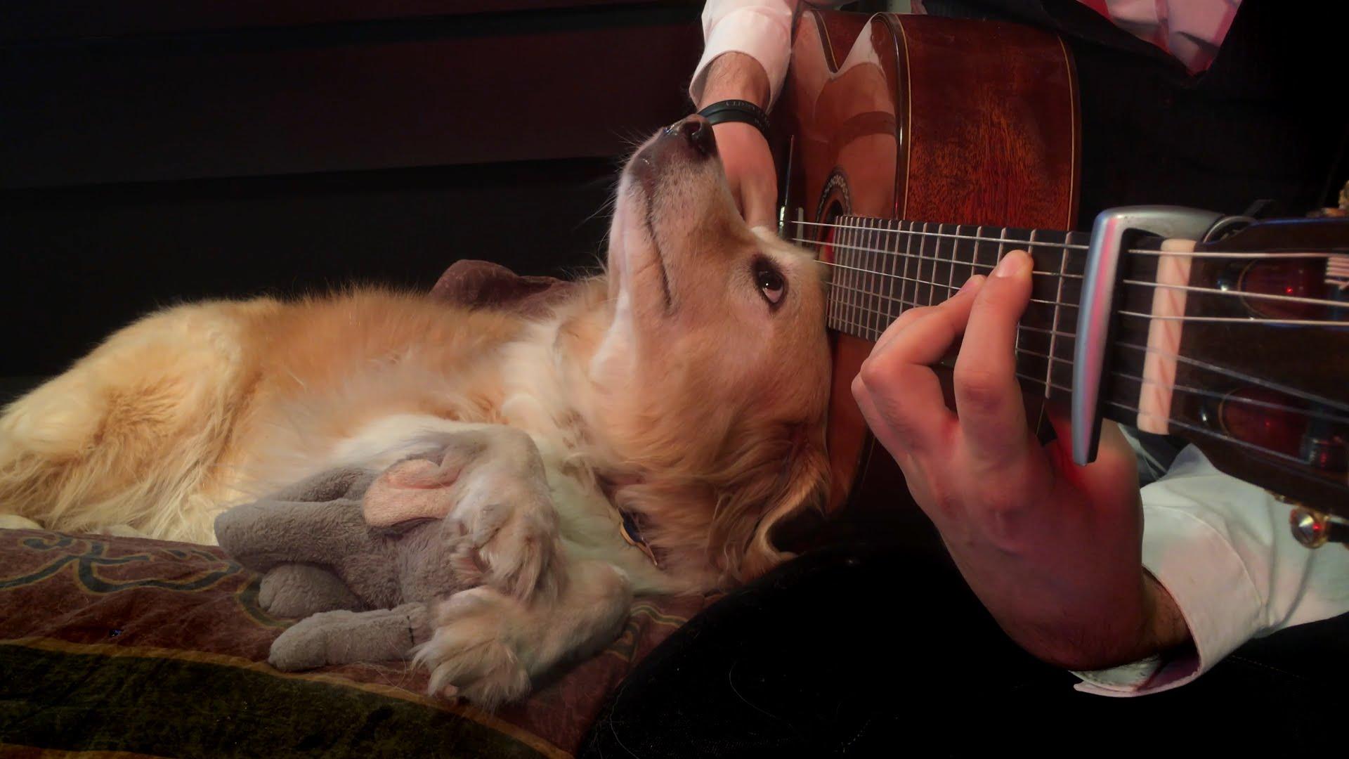 música relajante para perros guitarra