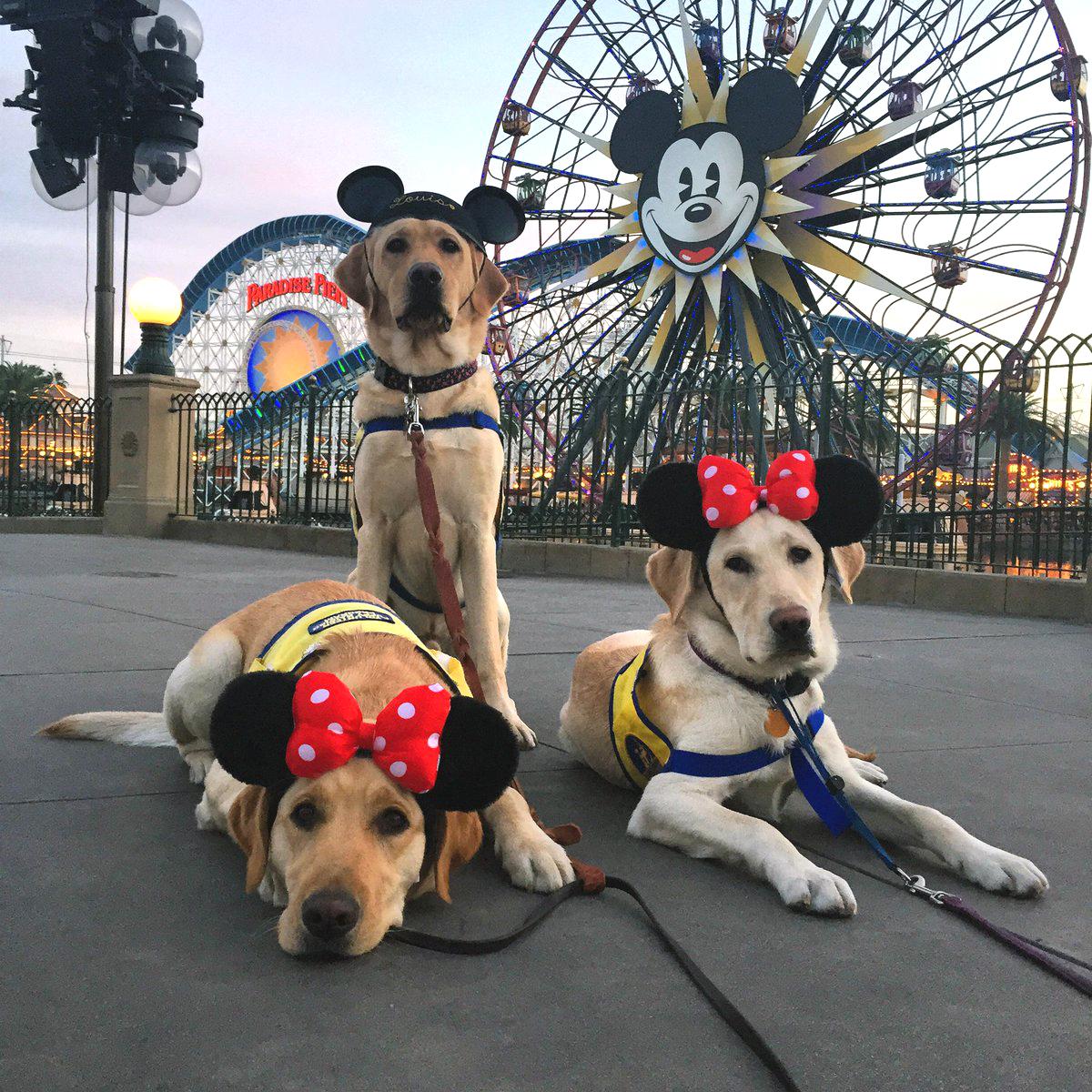 perros y magia
