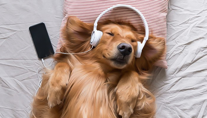 música relajante para perros