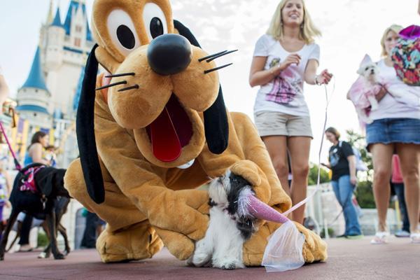 perros y magia disney world