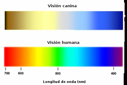 espectro color colores que ve un perro
