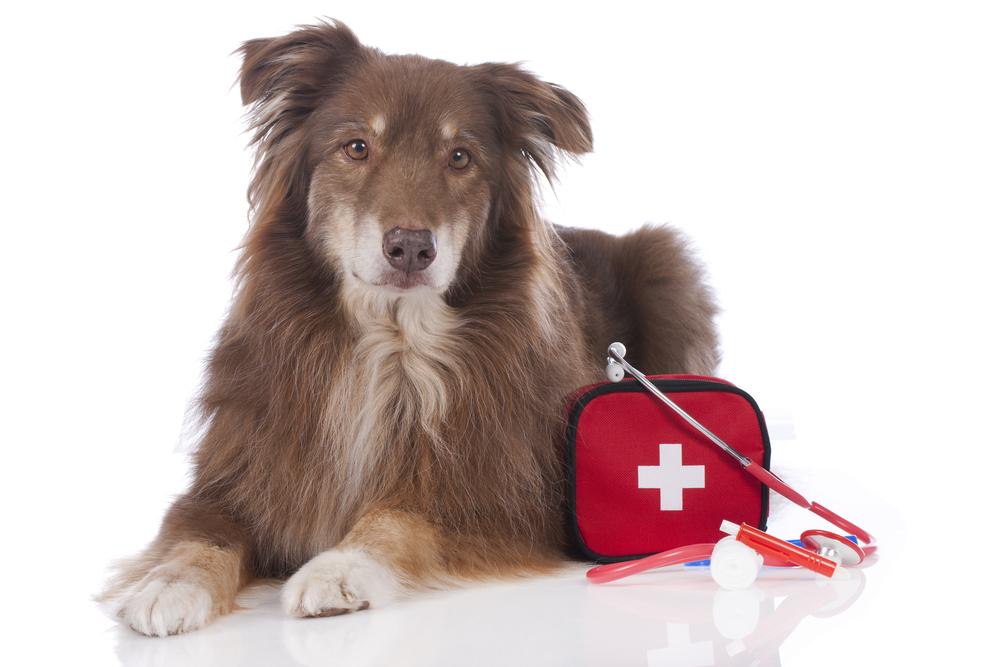 primeros auxilios para perros veterinario