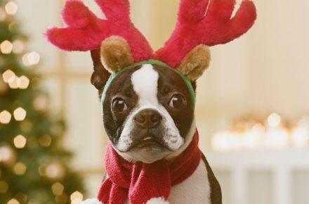 navidad con perro