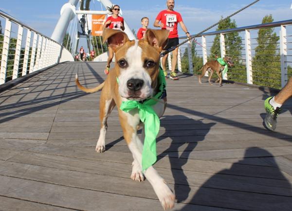 valencia con perro parque