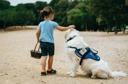 perro de terapia