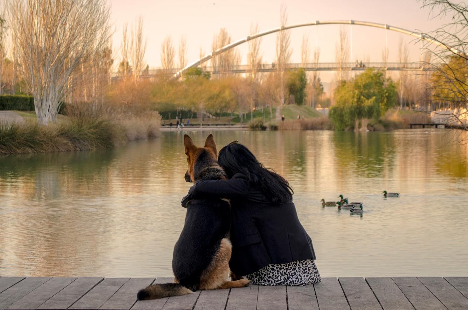 valencia con perro
