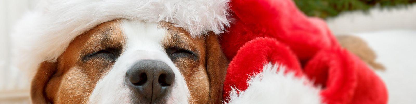 navidad con perro tranquilo
