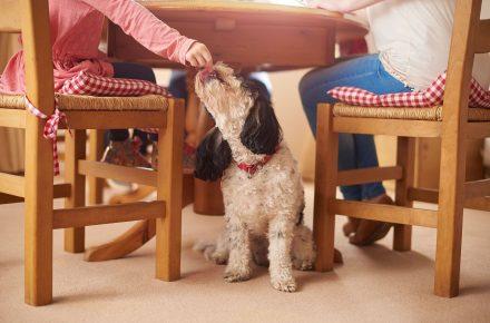 alimentos que puede comer tu perro navidad