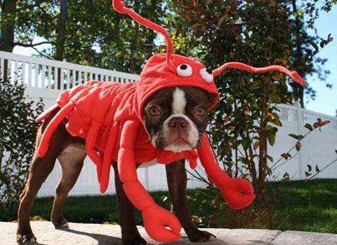 alimentos que puede comer tu perro marisco