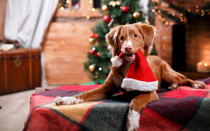 navidad con perro adornos